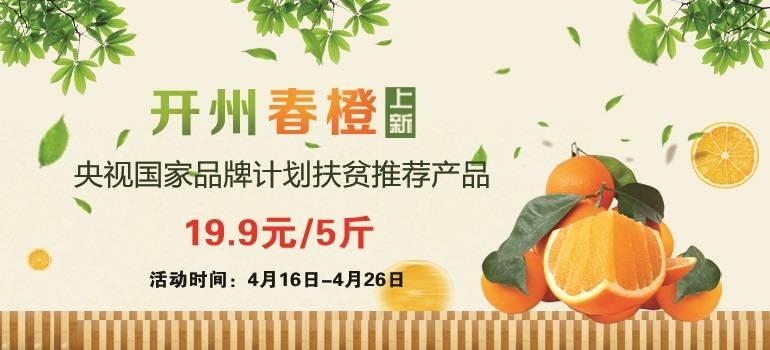 重庆开州春橙